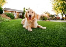 ARTIFICIAL GRASS FOR PET